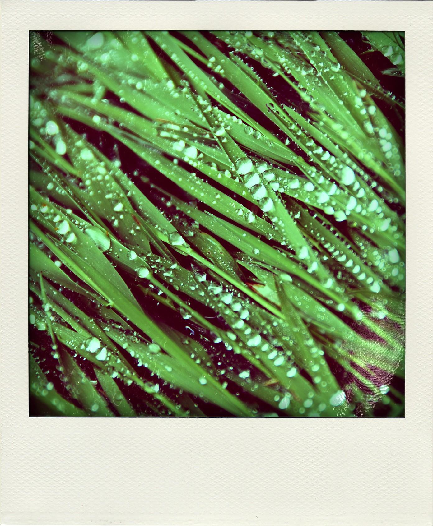 Grass & Water beads-pola.jpg